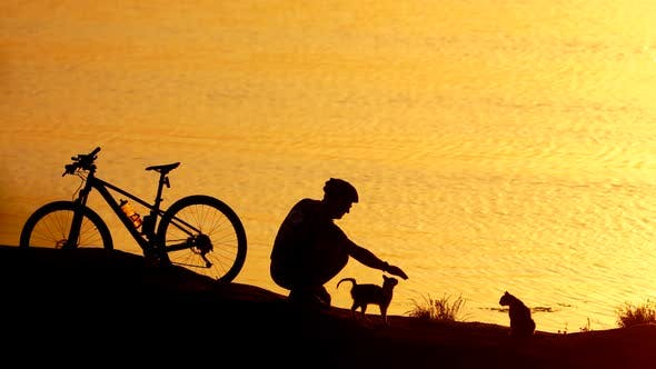 Man with animals on coast. Active man with bicycle playing with cat on coast