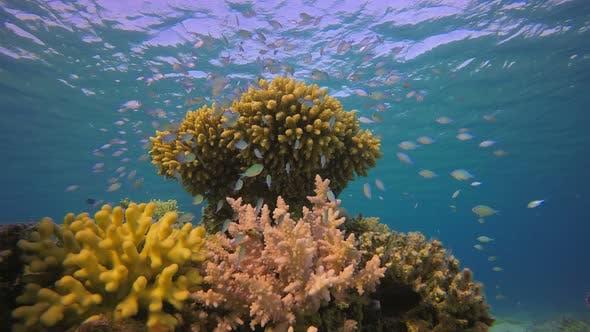 Blauer grüner Fisch unter Wasseroberfläche