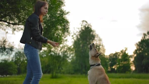 Thumbnail for Frau, die Nahrung zu ihrem Hund wirft, fängt ein Welpe es on the fly. Mittlerer Schuss.