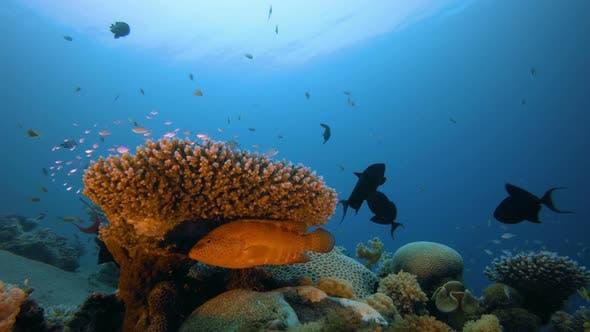 Cover Image for Underwater Scene Marine World