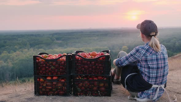 Thumbnail for Rear View of Woman Farmer Sitting Near Boxes with Tomatoes, Admiring the Beautiful Landscape