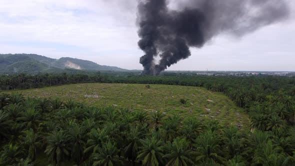 Fire happen near oil palm plantation