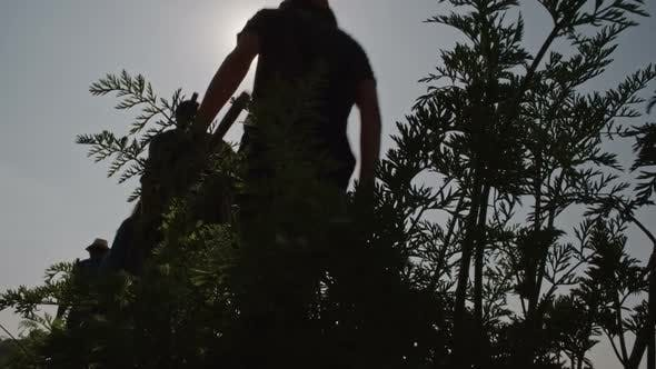 Thumbnail for Silhouettes of Young People Walking through Bushes