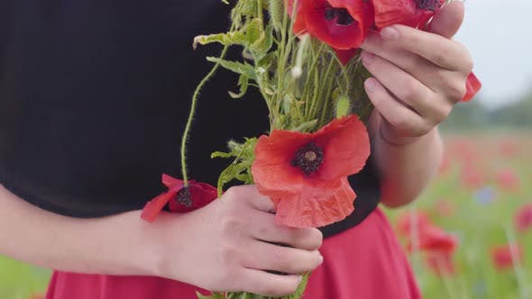 Thumbnail for Close-up of Unrecognized Female Hands Holding Bouquet of Flowers in a Poppy Field. Connection with