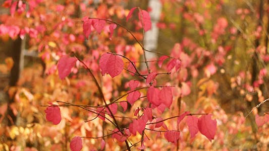 Red Autumn Leaves 4