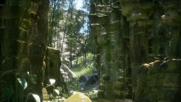 Ruined Ancient Stone House Overgrown with Plants and Ferns in Dense Green Forest