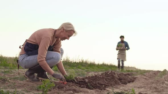 Thumbnail for Seasonal Workers Planting Seedling in the Field