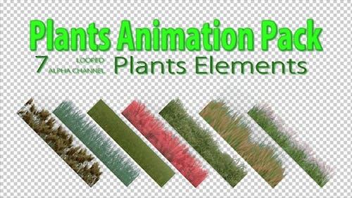 Pack de plantes