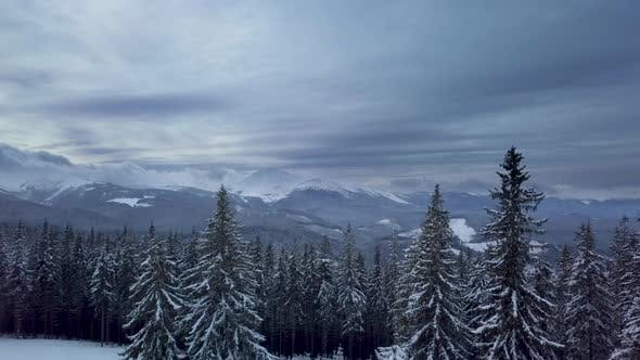 Thumbnail for Flying Over the Forest and Mountains in Winter
