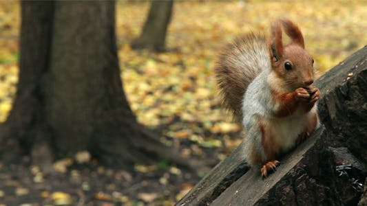 Thumbnail for Squirrel In A Park