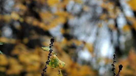 Thumbnail for Autumn Leaves Rustling In The Wind (Bokeh)