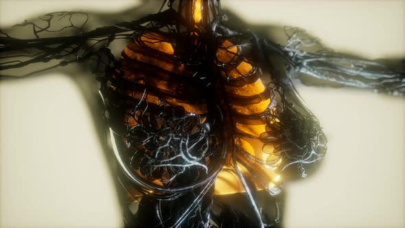 Thumbnail for Human Body Scan with Glowing Lungs and Trachea