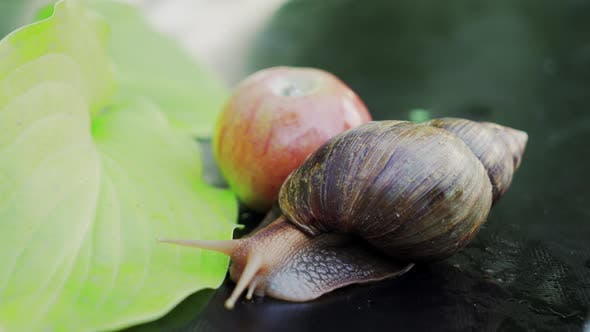 Thumbnail for Snail Crawling on Green Leafs