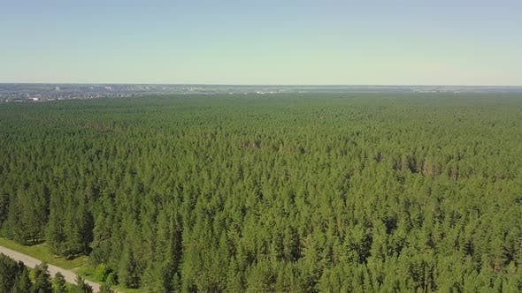 Thumbnail for Aerial: Flying Over Dense Forest, Pines. View of the Tourist City in the Distance