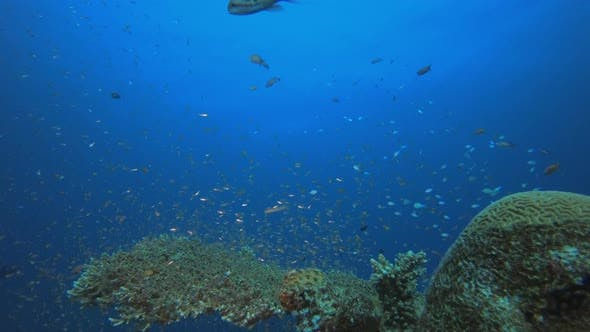 Thumbnail for Underwater Colorful Scenery
