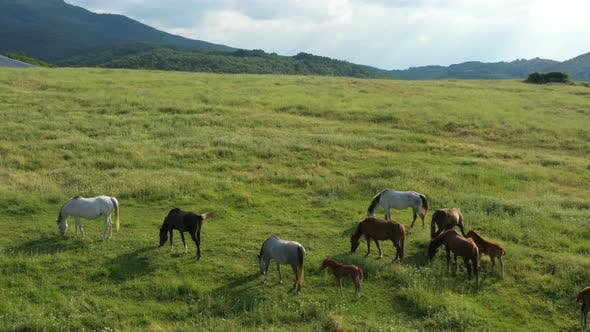 Thumbnail for Aerial View Of Horses 3
