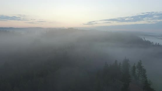 Thumbnail for Aerial Over Forest In Fog On Sunrise