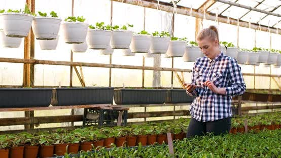 Thumbnail for Agribusiness, Female Farmer Working in Greenhouse