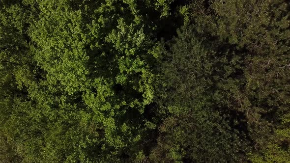 Cover Image for Top Down View Flying Forward Above Beautiful Green Forest.