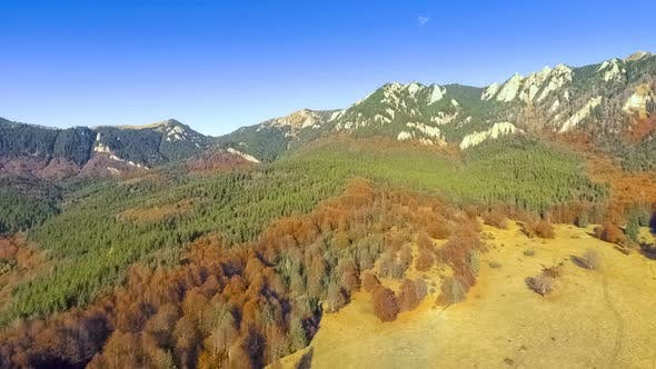 Thumbnail for Fly Over Colorful Autumn Forest