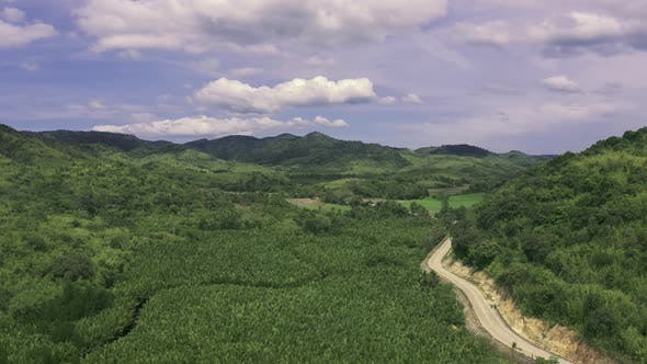 Cover Image for Mangrove Forest Along the Mountain and Winding Road in the Summer on the Coron