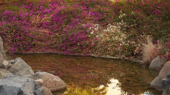 Thumbnail for Flowering Bush Reflected In a Small River