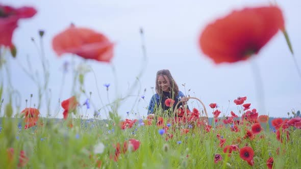 Thumbnail for Adorable Young Girl Walking in Poppy Field Gathering Flowers in the Wicker Basket