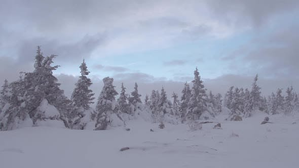 Dark Clouds Pass Over Snowy Forest. Feeling of Bad Weather and Approach of Hurricane