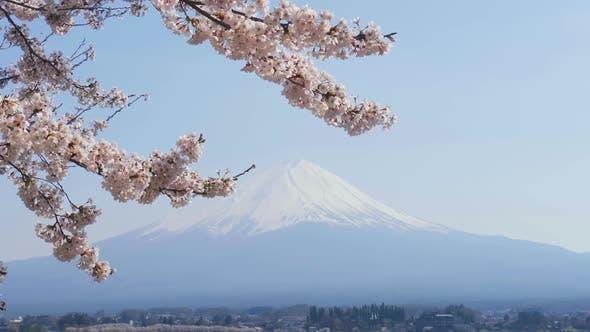 Thumbnail for Japan Cherry Blossom