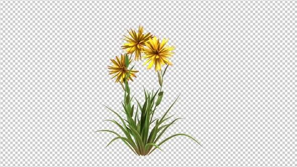 Wachsende gelbe Blumen