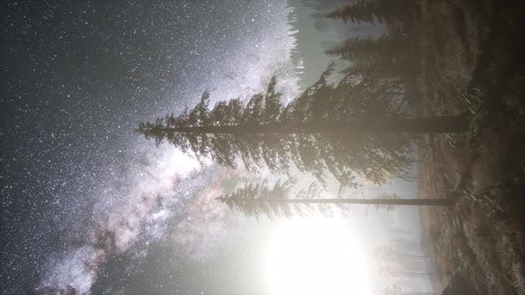Thumbnail for Milky Way Galaxy Over Forest