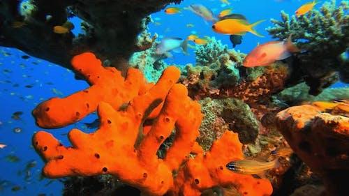 Colorful Red Sea Sponge