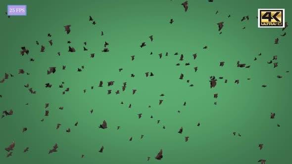 Thumbnail for Bat Side 4K