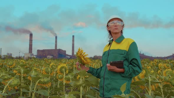 Thumbnail for Woman Agronomist Examines Sunflower on the Background of the Sunset Using a Test Tube.