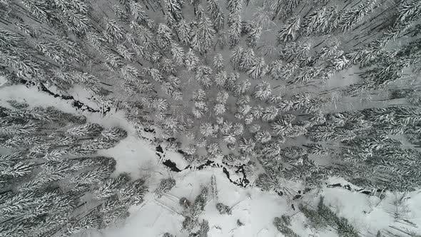 Thumbnail for Winterland, Fly Over Fir Tree in the Snowstorm. Cold, Carpatian