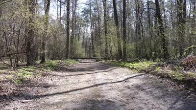 Aerial View of the Road Inside the Forest