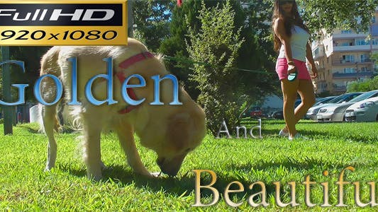 Thumbnail for Golden Retriever And Beautiful Girl FULL HD