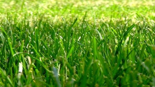 Thumbnail for Grass Field - Full HD Loop