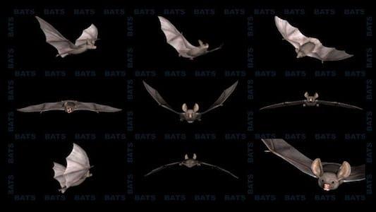 Thumbnail for Bats - Project Kit (9 Loops)