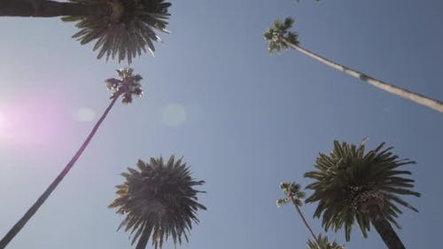 Palme treiben Zeitlupe nach oben schauen auf Palmen