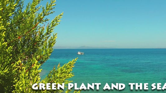 Thumbnail for Green Plant and the Sea