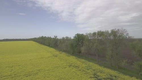 Fields Landscape D Log