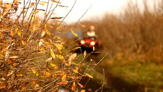 Thumbnail for Autumn Yellow Leaves And ATV Quad Bike