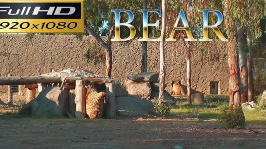 Thumbnail for Bear in the Zoo Park - Nature FULL HD
