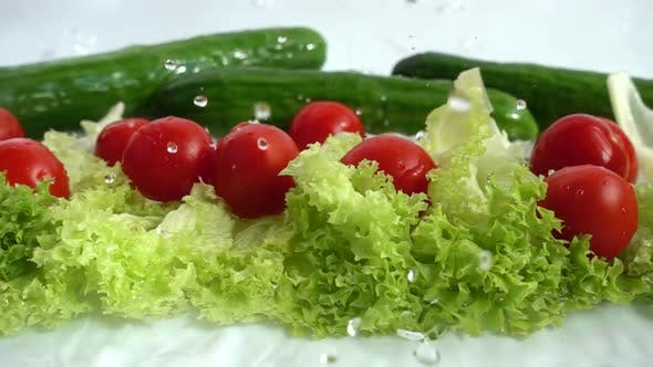 Thumbnail for Radish, Cucumbers and Lettuce Leaves 8