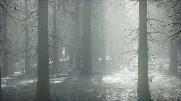 Thumbnail for Winter Snowcovered Forest on a Cloudy Day