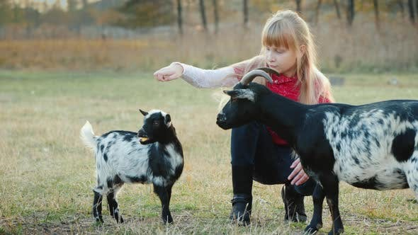 Thumbnail for Cool Girl Gets Confused To Treat a Kid, a Large Goat Selects a Treat