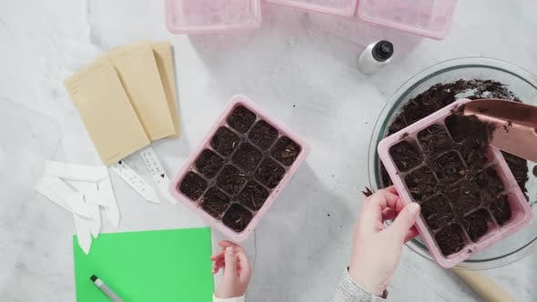 Thumbnail for Flat lay. Planting seeds in seed propagator with soil.