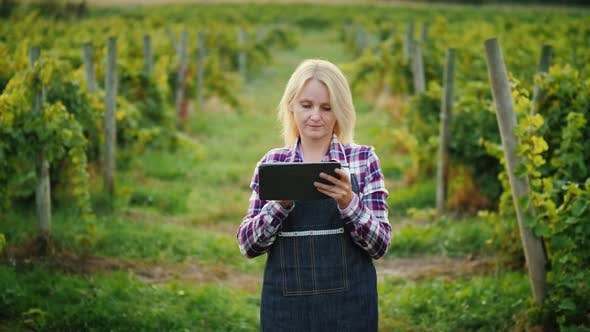 Thumbnail for Young Woman Farmer Uses Tablet Near the Vineyard