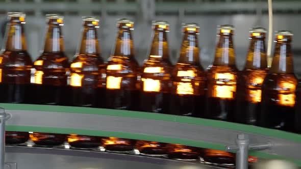 Filled Beer Bottles Are Transporting on Conveyor Belt in Bottling Workshop